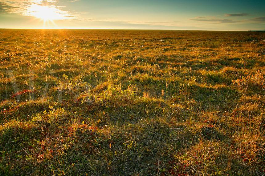 Arctic tundra on the coastal plain from the Dalton Highway, Alaska