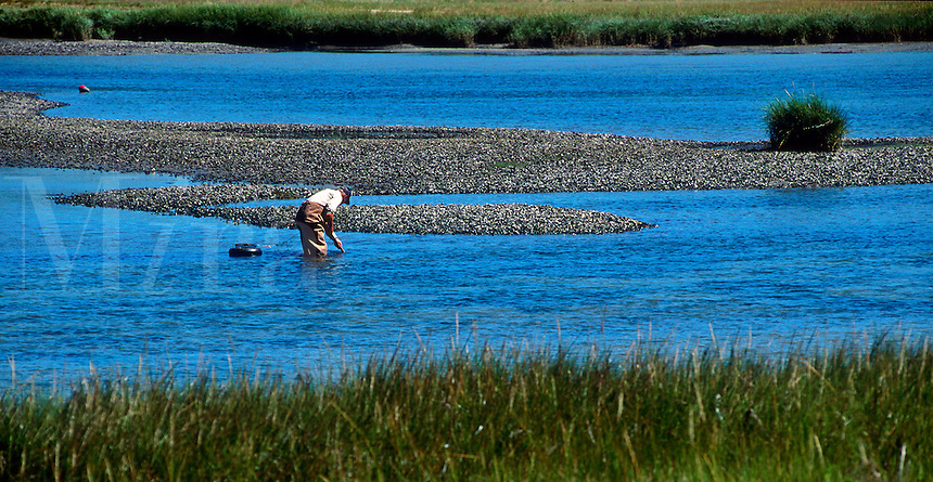 Man clamming at low tide, Orleans, Cape Cod