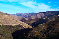 vineyards near vale de mendiz douro portugal