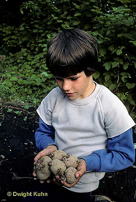 HS05-015b   Potato - child with seed potatoes,  red pontiac  variety