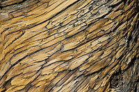 Wood pattern on dead tree (likely pinon pine) in Desert National Wildlife Range.
