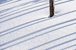 Shadow formations and tree trunks in deep snow. Yellowstone National Park, Wyoming, USA. January