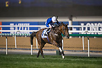 DUBAI,UNITED ARAB EMIRATES-MARCH 31: (5) Benbatl,ridden by Oisin Murphy,wins the Dubai World Cup at Meydan Racecourse on March 31,2018 in Dubai,United Arab Emirates (Photo by Michael McInally/Eclipse Sportswire/Getty Images)
