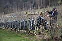 23/02/18<br /> <br /> Gavin Munro checks frames.<br /> <br /> Full Grown furniture is grown in a woodland near Wirksworth, Derbyshire. <br /> <br /> As seen here: <br /> http://www.dailymail.co.uk/news/article-5587659/Willows-transformed-seats-seven-years-available-buy-5-000.html<br /> <br /> All Rights Reserved: F Stop Press Ltd. +44(0)1335 344240  www.fstoppress.com.