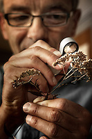 A botanist views a species of a plant with a magnifying glass at the Royal Botanical Gardens, Kew in London.