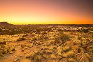 Image Ref: CA685<br /> Location: Olive Pink Botanical Gardens, Alice Springs<br /> Date of Shot: 14.09.18