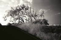 IR Road, Kohala Coast, Big Island