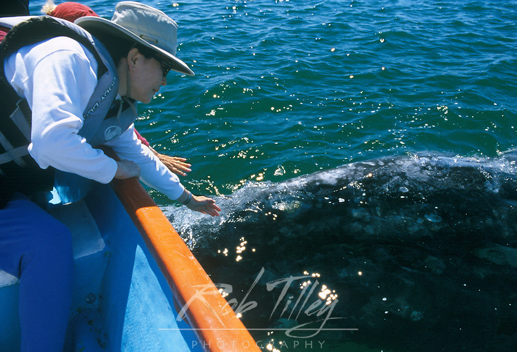 Mexico, Baja California Sur, San Ignacio, Laguna San Ignacio, Whale Watching (Eschrichtius robustus) Model Released
