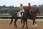 HOT SPRINGS, AR - February 18: Terra Promessa #2, ridden by Ricardo Santana, Jr., warms up in the post parade prior to  the Bayakoa Stakes at Oaklawn Park on February 18, 2017 in Hot Springs, AR. (Photo by Ciara Bowen/Eclipse Sportswire/Getty Images)