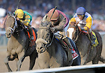 Jackson Bend (no. 1), ridden by Corey Nakatani and trained by Nick Zito, wins the 32nd running of the grade 1 Forego Stakes for three year olds and upward on September 3, 2011 at Saratoga Race Track in Saratoga Springs, New York.  (Bob Mayberger/Eclipse Sportswire)