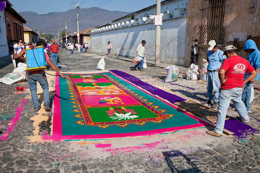 Antigua, Guatemala. Working on an alfombra (carpet) of colored sawdust decorating  the street in advance of the passage of a procession during Holy Week, La Semana Santa.  The alfombra will be finished only a couple of hours before the passage of the procession, after which the remains will be quickly swept away by municipal street sweepers.  A fine mist of water is sprayed on the carpet, to keep the sawdust in place and bring out the colors.
