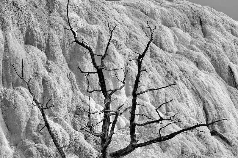 Dead tree and calcium hot spring formations at Mammoth Hot Springs. Yellowstone National Park, WY