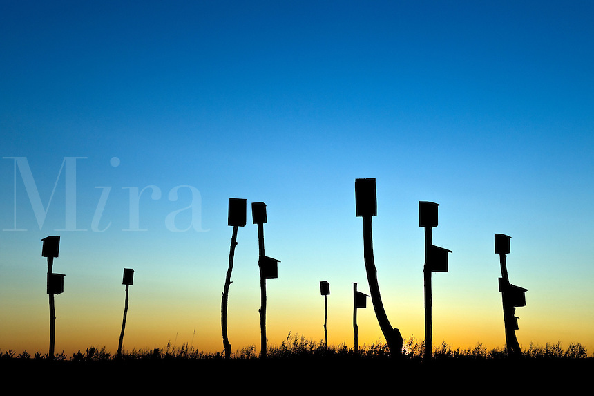 Birdhouses placed in a salt marsh, Sandwich, Cape Cod, MA, Massachusetts