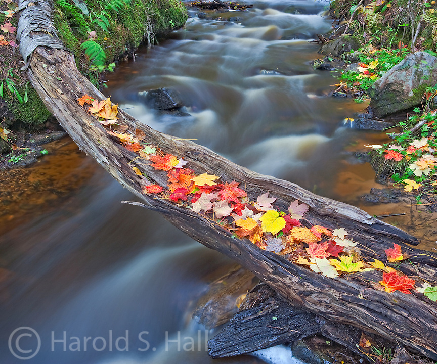 Fall leaves have fallen onto an old decaying log across a stream in Munising, Michigan.