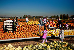 Crownd shopping farm with pumpkins and gords stacked for shipment or sale.