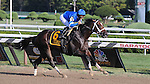 Emcee (no. 6), ridden by Alan Garcia and trained by Kiaran McLaughlin, wins the grade 1 Forego Stakes for three year olds and upward on September 1, 2012 at Saratoga Race Track in Saratoga Springs, New York.  (Bob Mayberger/Eclipse Sportswire)