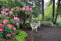 Benches with bloominmg rhododendrons at Crystal Gardens. Portland. Oregon