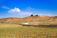 A view over the Crozes-Hermitage vineyards in the part of the appellation closes to Hermitage. On slopes with stone terraces. A man on bicycle on a road and a small house.  Crozes Hermitage, Drome, Drôme, France, Europe