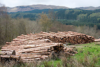 Cut timber at Inverary Castle, Argyll and Bute, Scotland.
