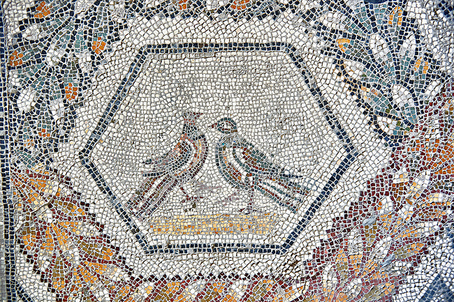 3rd century AD Roman mosaic panel of  two birds  from Thugga, Tunisia.  The Bardo Museum, Tunis, Tunisia.