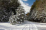 Caledonia Pike in Winter, Moshannon State Forest, Pennsylvania