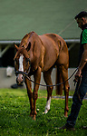 LOUISVILLE, KY - MAY 02: Good Magic grazes at Churchill Downs on May 2, 2018 in Louisville, Kentucky. (Photo by Alex Evers/Eclipse Sportswire/Getty Images)