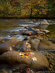 Leaves rest on a stone in the Little River near Metcalf Bottoms in the Great Smoky Mountains National Park in Tennessee, USA