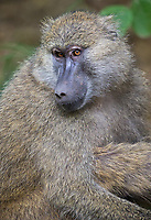We had some close baboon encounters throughout this trip.