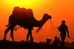 A camel is lead in front of the setting sun by Himanshu Sharma