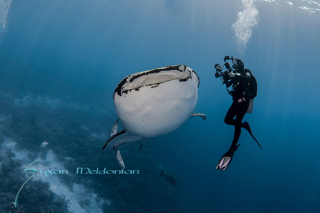 Whale shark and Deb Wallace