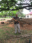 volunteer building the nests with wood reclaimed from Crepe Myrtle trees removed on the property