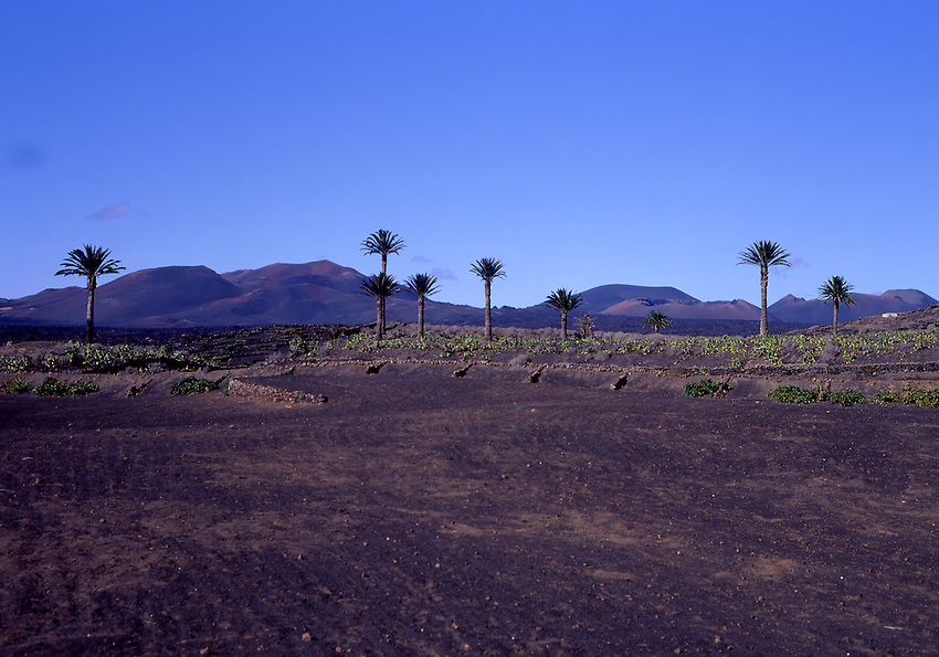Afrika, ESP, Spain, Canary Islands, Lanzarote, Typical Landscape, Montanas del Fuego, Vulcanic Landscape, Nationalpark Timanfaya, Palmtrees....[ For each utilisation of my images my General Terms and Conditions are mandatory. Usage only against use message and proof. Download of my General Terms and Conditions under http://www.image-box.com or ask for sending. A clearance before usage is necessary...Material is subject to royalties. Each utilisation of my images is subject to a fee in accordance to the present valid MFM-List...Contact | archive@image-box.com | www.image-box.com ]