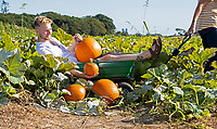 BNPS.co.uk (01202) 558833. <br /> Pic: CorinMesser/BNPS<br /> <br /> Pictured: Musican Leonardo MacKenzie gets the pick of the pumpkins at Sopley Farm pick your own in Christchurch Dorset. <br /> <br /> Pumpkin farmers have begun harvesting their crop in the late summer sunshine.<br /> <br /> While many farmers and wholesalers say it has not been a great year for the autumnal fruit, these farms have some squashes ready to be cut.<br /> <br /> Forde Abbey in Chard, Somerset, have beaten the odds with a decent crop in their kitchen garden.<br /> <br /> Gardener Jo Witts said they were expecting to harvest around 200 pumpkins which will be left to dry out ready for pumpkin rolling in the half term holidays.<br /> <br /> At Sopley PYO Farm in Christchurch, Dorset, families have been getting in there early to pick their pumpkins before Halloween.