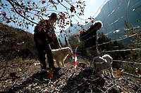 Max George and Jean Claude Authier take their dogs back out of Jean-Claude's truffle field in the hills near Puget-Theniers, France, 09 February 2011. Truffle producing locations are often fenced, to ward off unwelcome visitors (and wild boars, who love the taste of truffle - the red and white tape is an extra deterrent against them). Organised teams of truffle thieves comb certain known truffle-producing valleys by night. Jean-Claude and Max harvest the truffles in their own fields several times a week in season to minimise any loss to thieves.