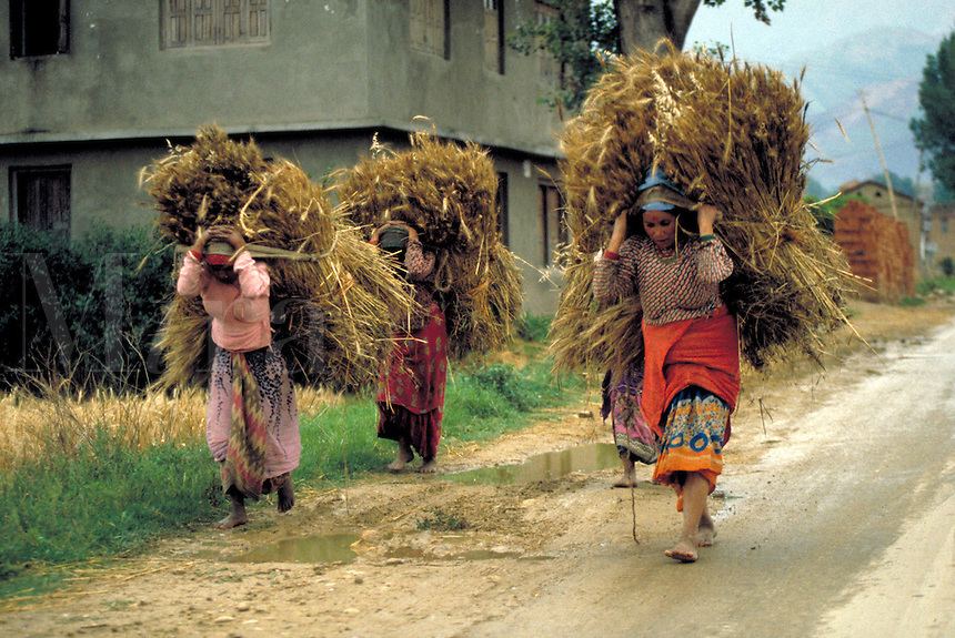 These women carry harvested wheat from nearby fields to their homes in order to make bread. While agriculture is Nepal's primary economic activity, employing over 90% of the people, only 20% of the nation's land can be cultivated. occupations, tra ade, cr