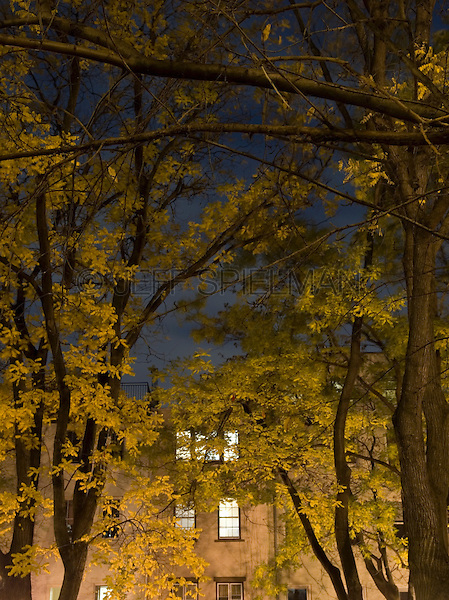 AVAILABLE FROM JEFF AS A FINE ART PRINT.<br /> <br /> AVAILABLE FOR LICENSING FROM PLAINPICTURE.  Please go to www.plainpicture.com and search for image # p5690225.<br /> <br /> Apartment Windows Seen at Night Thru Trees with Autumn Foliage, The Chelsea Neighborhood of Manhattan, New York City, New York State, USA