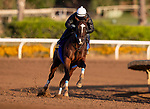 OCT 27:Breeders' Cup Distaff entrant Paradise Woods, trained by John A. Shirreffs, works at Santa Anita Park in Arcadia, California on Oct 27, 2019. Evers/Eclipse Sportswire/Breeders' Cup