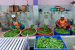Auroville, India - April 2021: Human Unity in Covid Time. Washing salad for lunch meal at solar kitchen.