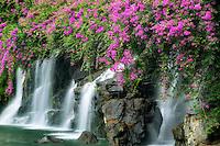 Waterfalls with boganvilla flowers. Maui, Hawaii