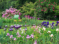 Iris and other flowering plants with chair at Schriners Iris Garden. Oregon