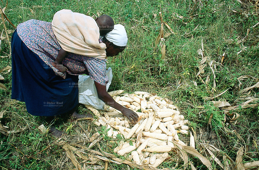 Kenya. Rift Valley Province. Matisi. A woman carries her child on her back and picks up maize cobs on the ground during the harvest season. © 2004 Didier Ruef