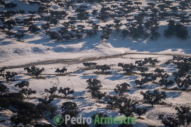 15/01/2021. España<br /> Ungulados sin acceso a pasto, en el Embalse de El Pardo<br /> <br /> 'Filomena' también ha golpeado con dureza a las zonas más rurales, cubriendo de nieve y hielo campos de cultivo, invernaderos y granjas de animales. El temporal, al igual que la pandemia, ha mostrado la urgencia de relocalizar la producción agrícola, fomentar la agricultura urbana y periurbana y crear centros logísticos que den soporte a la pequeña producción alimentaria y a las comunidades rurales. La alimentación es un sector estratégico para la supervivencia, por lo que es fundamental un cambio de modelo y una apuesta decidida por la agroecología.<br /> <br /> ©Pedro Armestre/Greenpeace