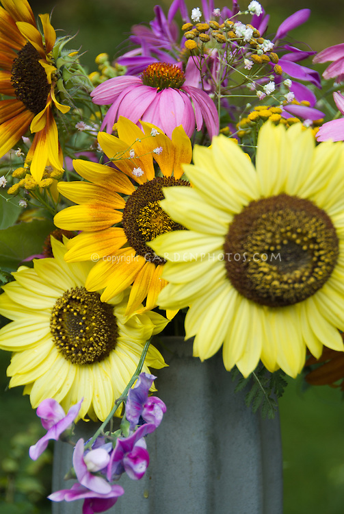 Helianthus sunflowers cut flowers vase with sweet peas, echinacea, etc