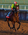 October 29, 2014:  Palace, trained by Linda Rice, exercises in preparation for the Breeders' Cup Xpressbet Sprint at Santa Anita Race Course in Arcadia, California on October 29, 2014. Scott Serio/ESW/CSM