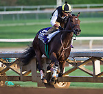 October 26, 2014:  Little Alexis, trained by Carlo Vaccarezza, exercises in preparation for the DraftKings Breeders' Cup Filly & Mare Sprint at Santa Anita Race Course in Arcadia, California on October 26, 2014. Scott Serio/ESW/CSM