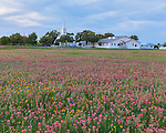 Seguin, Guadalupe County, TX: Field of wildflowers with Christ Lutheran Church of Elm Creek in the distance at dusk