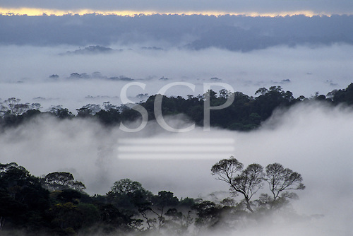 Amazon, Brazil. Overview of the rainforest of the Guyana Highlands in the early morning mist.
