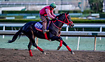 October 30, 2019: Breeders' Cup Sprint entrant Shancelot, trained by Jorge Navarro, exercises in preparation for the Breeders' Cup World Championships at Santa Anita Park in Arcadia, California on October 30, 2019. Scott Serio/Eclipse Sportswire/Breeders' Cup/CSM