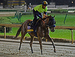 November 1, 2018 : Blue Prize, trained by Ignacio Correas, trains for the Breeders' Cup Distaff at Churchill Downs on November 1, 2018 in Louisville, KY. Jessica Morgan/ESW/CSM