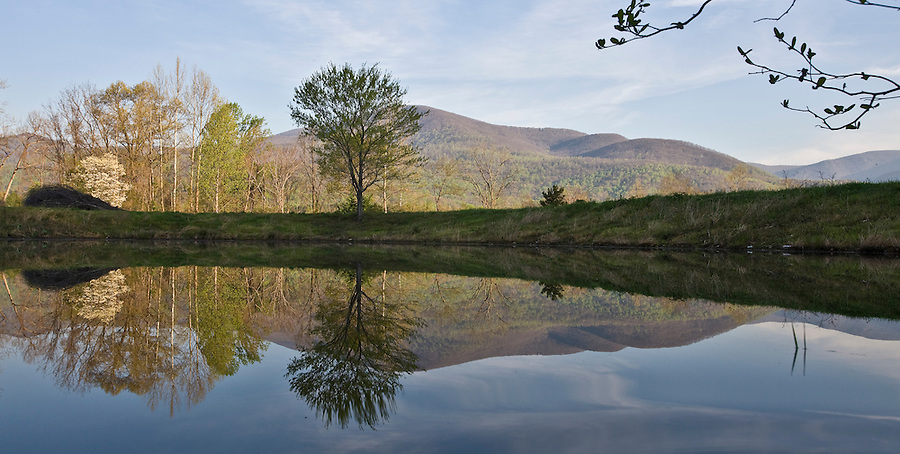 A lone tree is reflected on a pond in Albemarle County, VA. Photo/ Andrew Shurtleff
